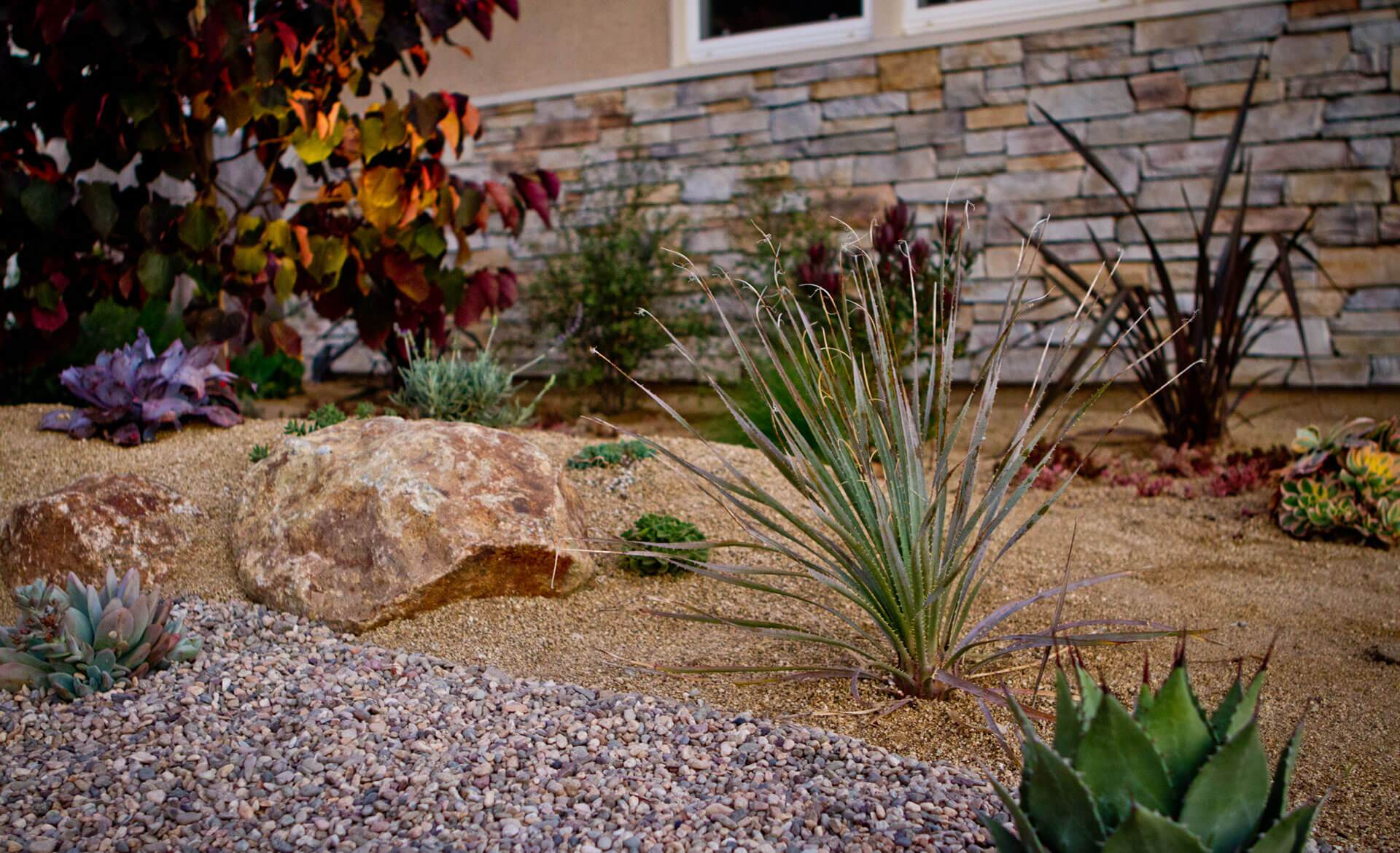 Desert plants can accentuate your home