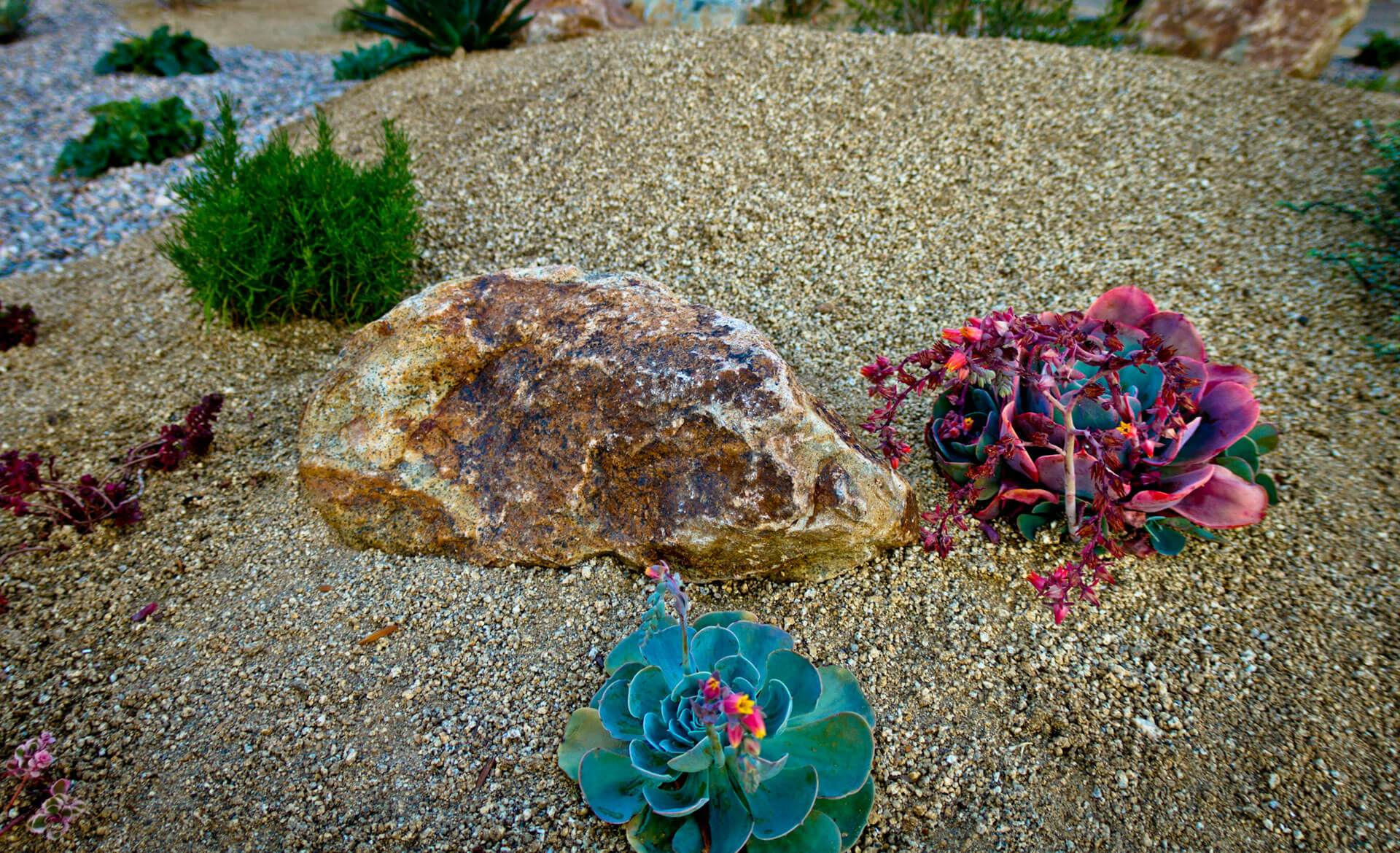 Succulents can provide a pop of color